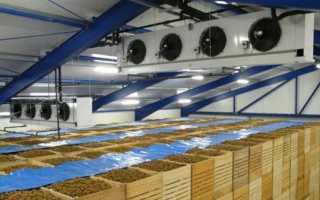 Оборудование для овощехранилищ — создание микроклимата