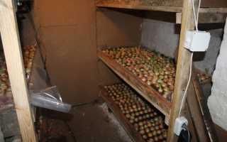 Выращивание в подвале: варианты традиционные и экзотические
