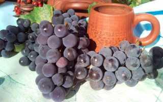 Как хранить виноград в погребе — оптимальные условия для ягод