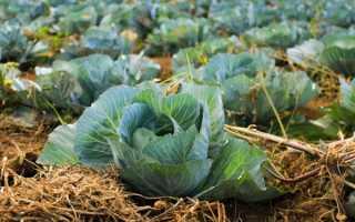 Температура в погребе для хранения овощей зимой (овощехранилище)