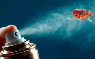 Подвальные блохи — эффективные методы борьбы с паразитами