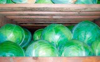 Как хранить капусту в погребе зимой: правильные способы