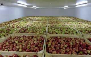 Хранилище для яблок: способы хранения