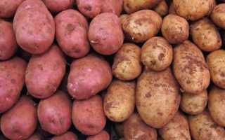 Как хранить картошку зимой в погребе и оптимальная температура для овощей