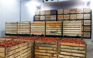 Хранение моркови в овощехранилище: как сохранить