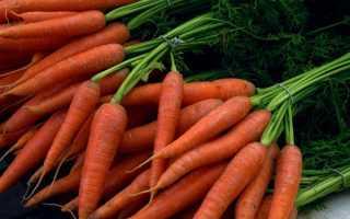 Как хранить морковь и свеклу зимой в погребе