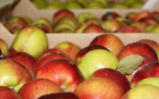 Как хранить яблоки в погребе — особенности и лучшие способы