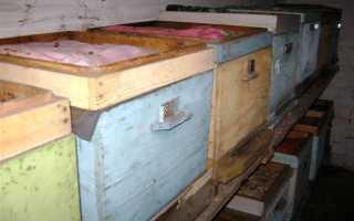 Зимовка пчел в погребе — необходимые условия