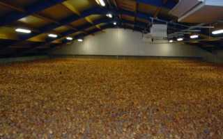 Овощехранилище лука: какие условия соблюдать для хранения лука