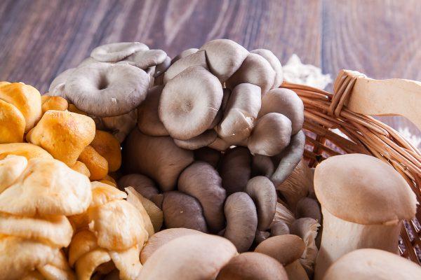 О выращивании грибов вешенок