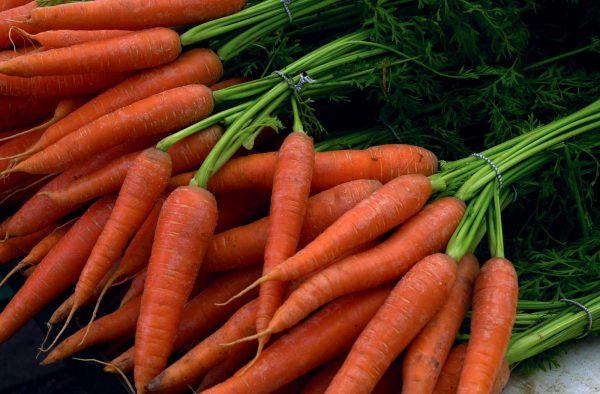 Как хранить морковь в погребе?