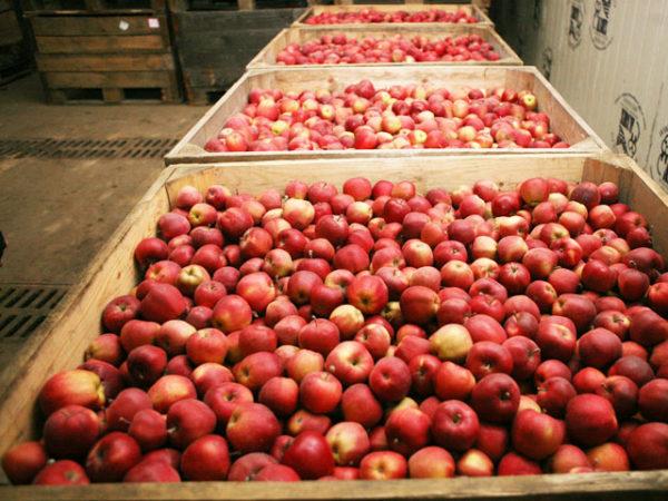 Хранилище для яблок