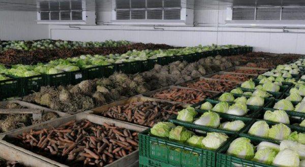 Какая температура должна быть в овощехранилище?