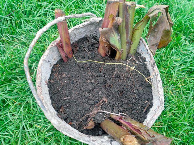 Растения в ведре