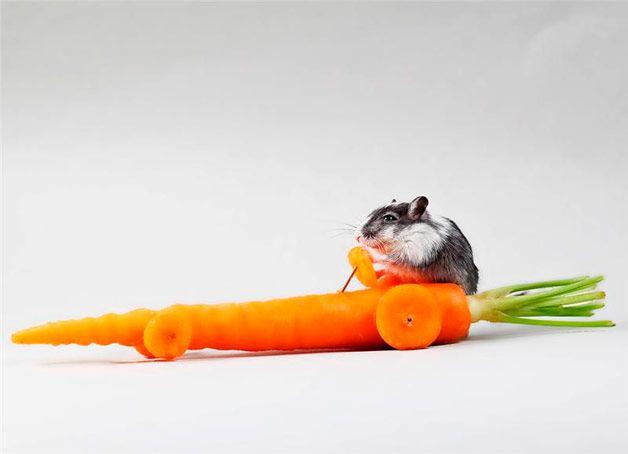 Мышонок на машинке из моркови