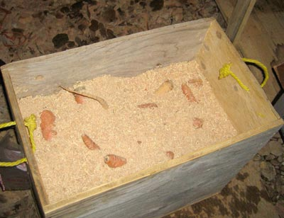 На фото – ящик для хранения моркови в опилках