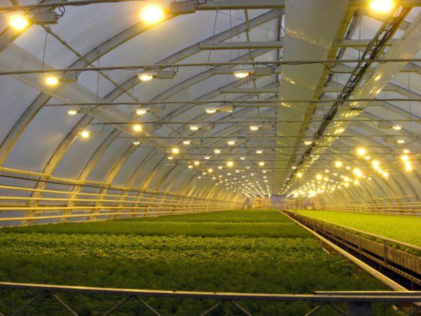 Требования к овощехранилищам