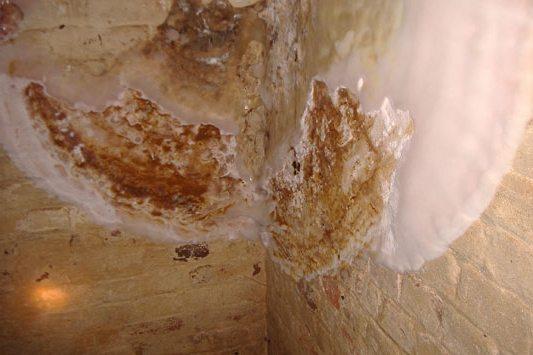Плесень на стенах от сырости