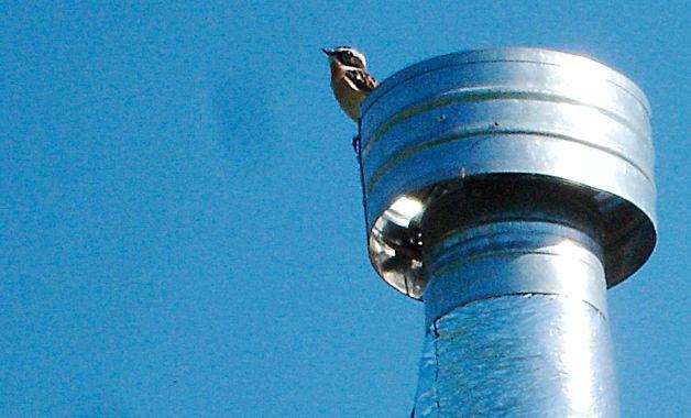 Птица на трубе